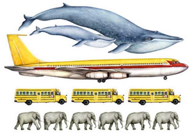 Blue Whale Comparison - Sri Lanka